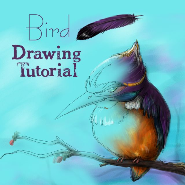 how to draw a bird step by step