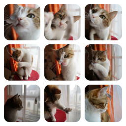pets & animals cute cat collage