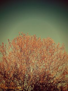 photography street sky tree cross process