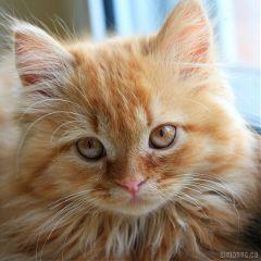 kittens love pets & animals cats