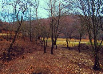 winter nature landscape forest photography
