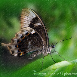 indonesia photography butterfly bokeh rain water funnzyfam