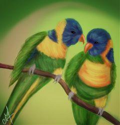draw drawing bird animals dcbird