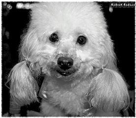 black & white bokeh pets & animals photography