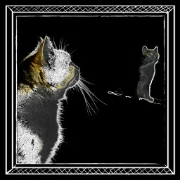 pets & animals cute cat black & white photography