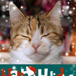 pets & animals cute cat christmas