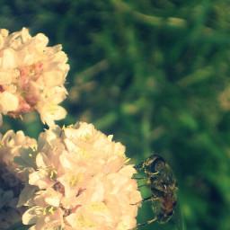 photography flower summer andorra travel nature