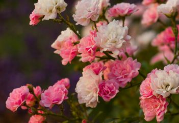 photography switzerland flowers