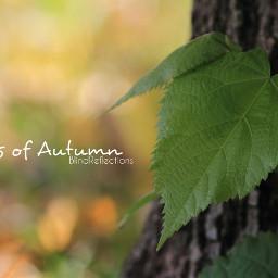 canon noedit mood nature autumn