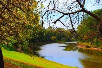 autumn colorful emotions nature park