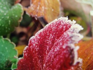 macro frost winter nature colorful
