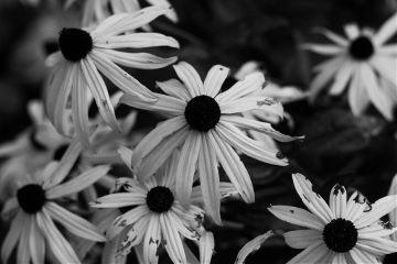 photography black & white switzerland