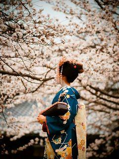japan geisha kimono beautiful cherry blossom