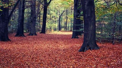 nature colorful photostory autumn