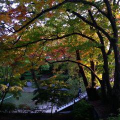 korea nature people autumn colorful