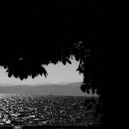 black & white lake nature tree